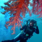 Phuket WestCoast diving sports